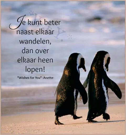 Citaten Over Wandelen : Best images about citaten on pinterest humor dutch