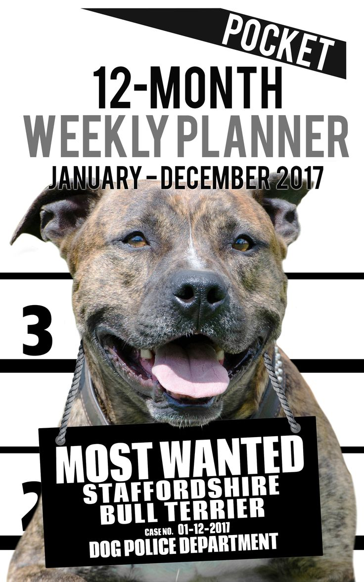2017 Pocket Weekly Planner - Most Wanted Staffordshire Bull Terrier: Daily Diary Monthly Yearly Calendar (Dog Planners) 2017 Pocket Weekly Planner for Dog lovers - Staffordshire Bull Terrier lovers in particular! Adorable Most Wanted Staffordshire Bull Terrier image graces the cover of this pocket size cute engagement calendar. Popular easy to use planner format shows a week-at-a-view to help keep you organized 7 days at a time. Calendar/planner covers 12 months (January 2017 -December…