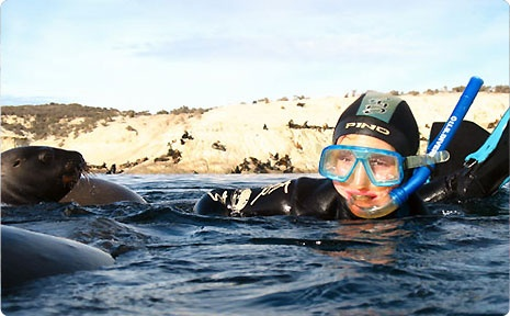 SCUBA Diving at Puerto Madryn with sea lions