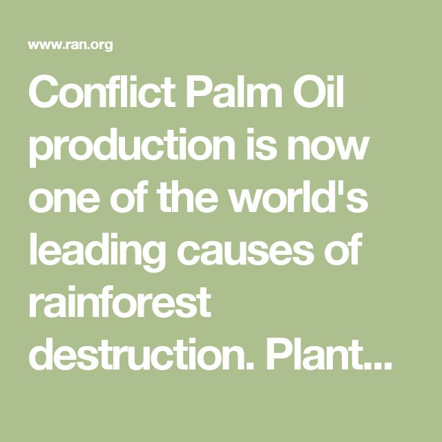 Conflict Palm Oil production is now one of the world's leading causes of rainforest destruction.Plantation expansion is pushing deep into the heart of some of the world's most culturally and biologically diverse ecosystems. Irreplaceable wildlife species like the Sumatran Rhino, Sumatran Elephant and the Sumatran and Bornean orangutan are being driven to the brink of extinction.