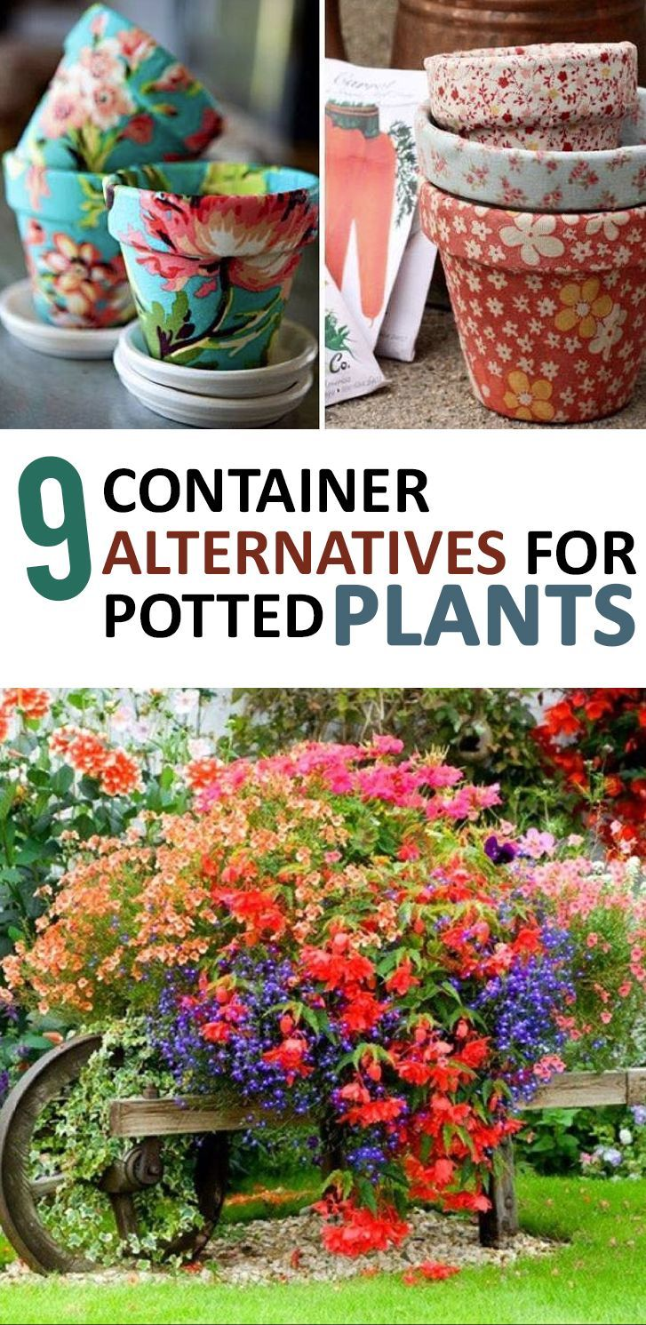 Container Gardening, Things To Do With Potted Plants, Potted Plant Tips,  Unique Container