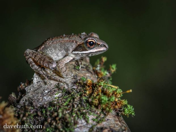 winter learn more about frogs and how to help them in your backyard