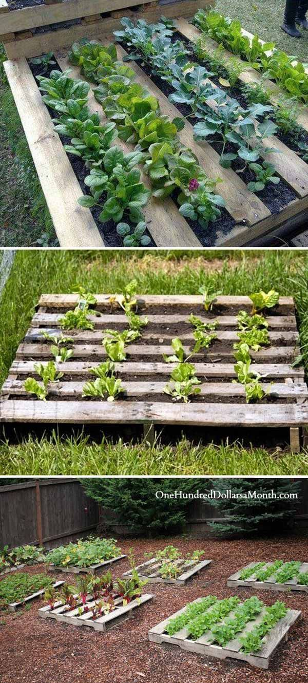 Staple garden cloth on the backside of the pallet fill with dirt and start growing #palletprojects #pallet #gardeningtips #vegetable