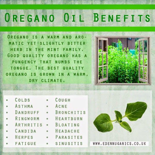 Oregano oil supplement benefits