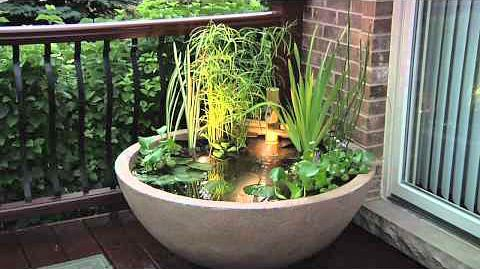 from thegardenglove.com  Prefer a little more height (sm. cattails), one will grow higher- love idea of light underwater for pm