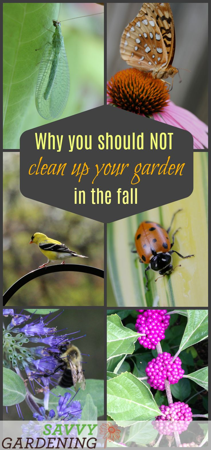 361 best garden advice u0026 tips images on pinterest garden ideas