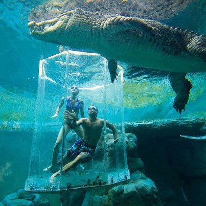 Darwin Australia...Dive with saltwater crocs! Care to try it?