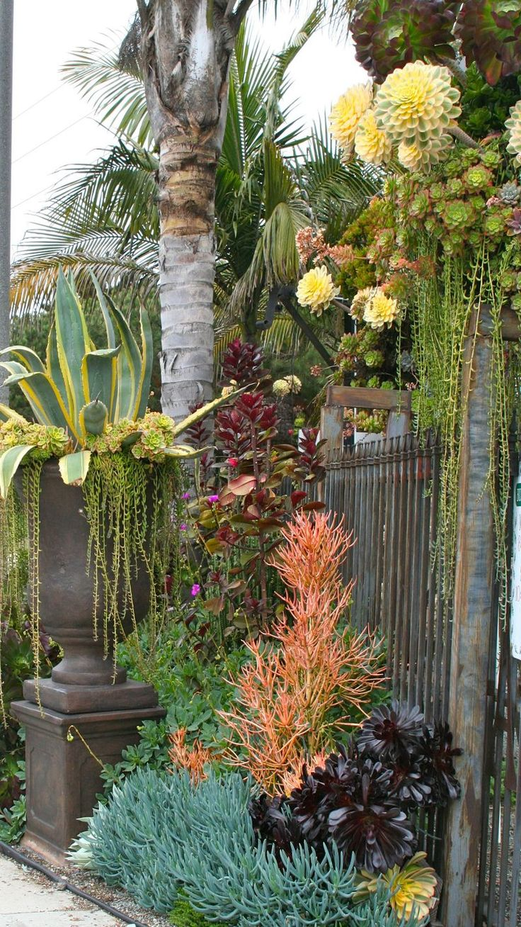 Great succulent design. Love the modulation in height because of the difference in plantings.