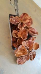 Sterculia landlotus Flower decoratie materiaal - 5252572000444 - Avantius