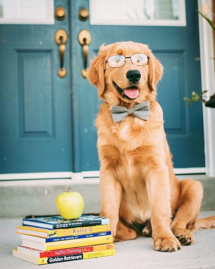 Back To School Day Goldenretriever Glasses Dog Calendar