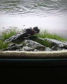Project Scree minimalist aquarium