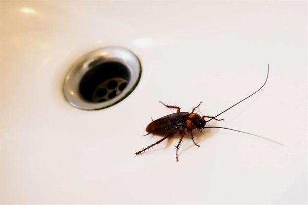 52d9022948f9064096eb79cb1561d63a - How To Get A Pest Control License In Georgia