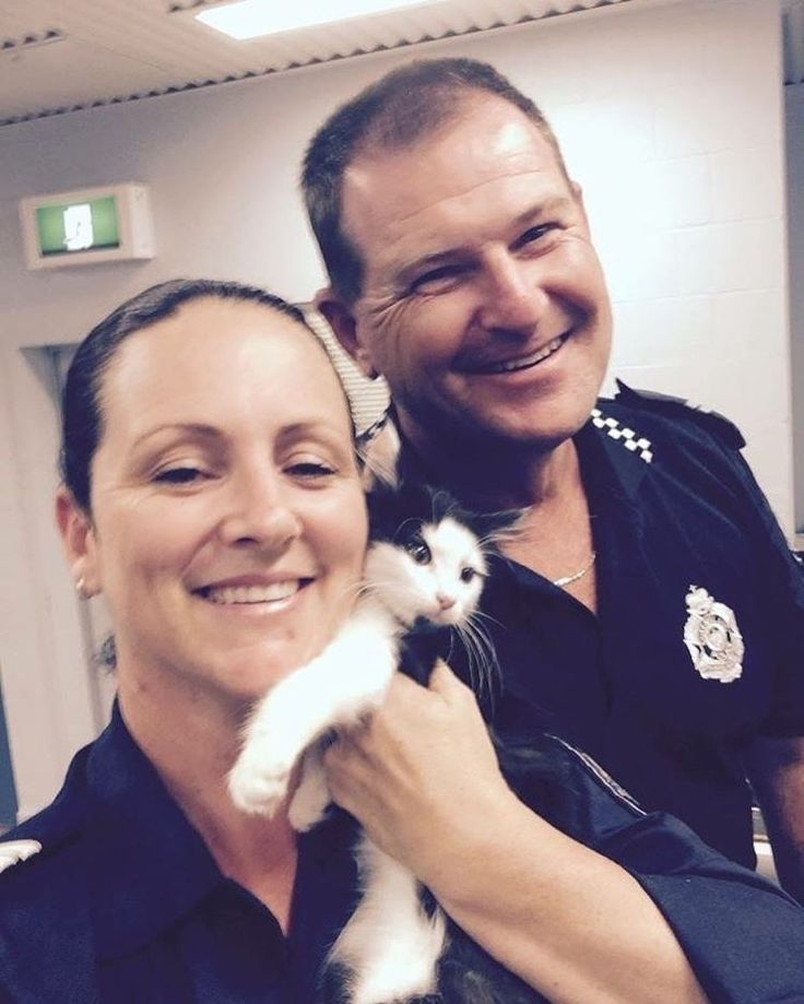 Pine Rivers officers were feline like something was suspicious when this moggy broke in to the watch house yesterday.  Perhaps a confession for a life spent as a cat burglar or an attempt to join the paw-lice? ♀️ #catsofinstagram #catstagram #queenslandpolice #qldpolice #qpsmedia #qps #police #officer