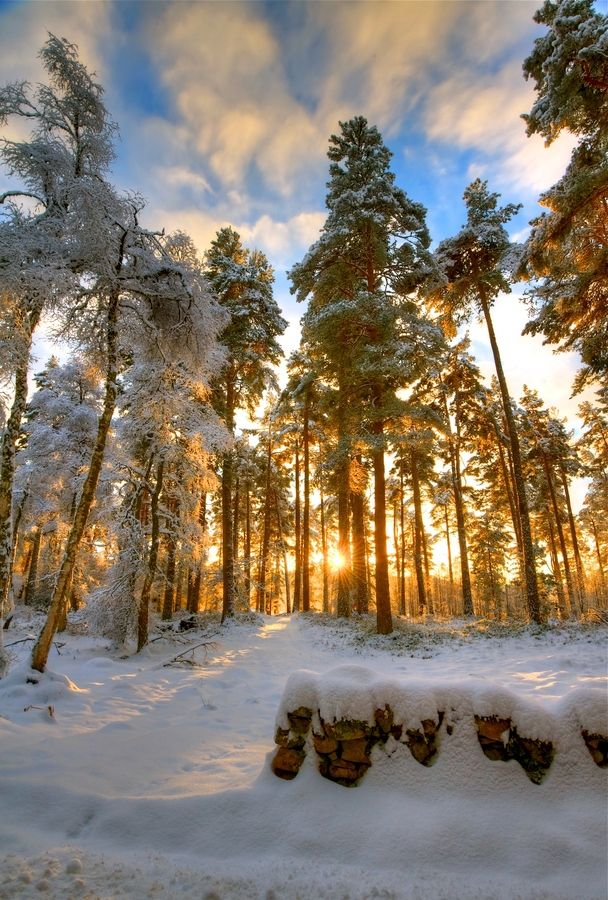 The beauty of Scotland is shown here, as the sun comes over the hills at 9am and the first light breaths golden light onto the pines