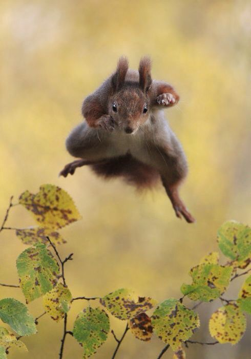 Leap for victory #squirrelinsta
