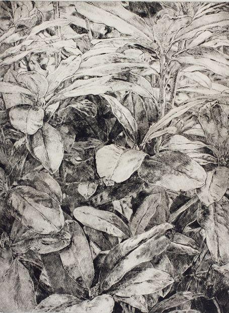 Rododendro, 2013. Punta seca, plancha: 32 x 24,5 cm. Edición: 10 –Detalle–