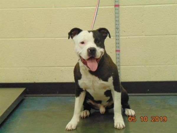 Dog For Adoption Wally A Mixed Breed Breed In Memphis Tn In