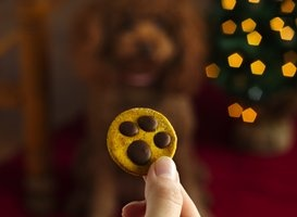 Paw Print Dog Treats Recipe from Betty Crocker