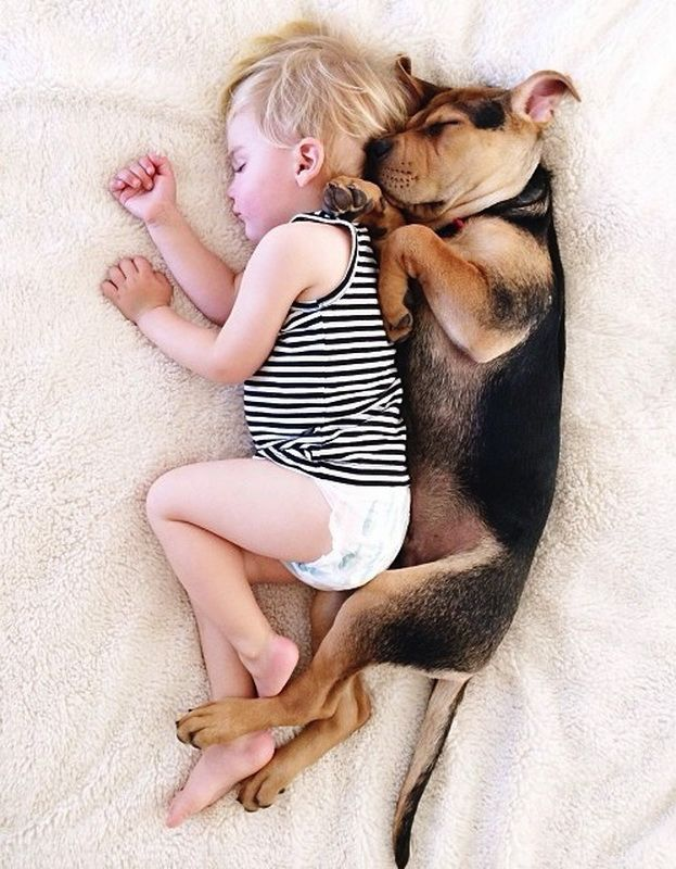 Beau and His Puppy Theo Napping Together