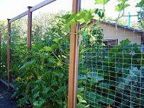 Vadvédelmi háló mellett biztonságban nevelhetjük virágainkat, vagy gazdasági növényeinket.  http://a-necc.hu/vedohalok-vadak-ellen.htm