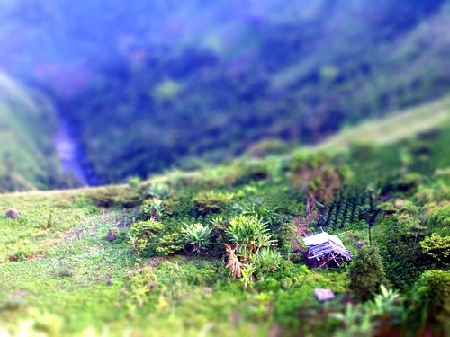 Casa (Tiltshiftmaker), San Agustin (Huila), Colombia by Joz3.69, via Flickr