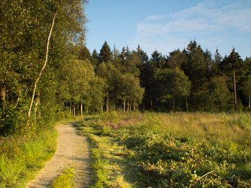 Mensingebos/ Sterrenbos Roden (14km) http://wandelenrondroden.nl/lange-routes-11-20km/wandelroutes/11-20km/mensingebos-roden  Een mooie een gevarieerde wandelroute vanaf het centrum van Roden door gemengd bos en weide, zandpad en heide, stroomdallandschap en coulissenlandschap van ca. 14 km. De route kan ingekort worden. Er zijn een beschrijving in PDF-formaat en een wandelkaart beschikbaar.