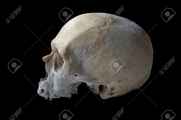 9056562-authentic-human-skull-in-left-view-isolated-in-black-background-Stock-Photo.jpg (1300×863)