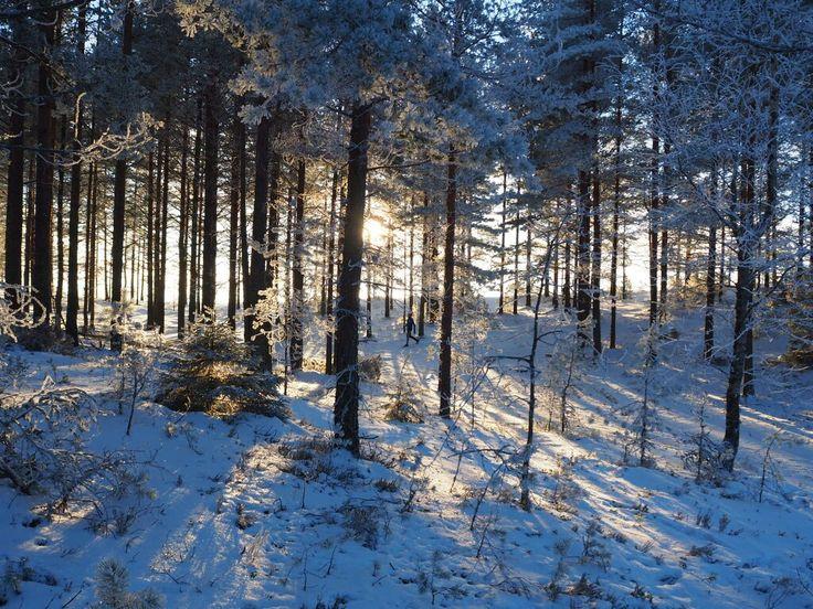 Sunny and lovely Sunday in Jämijärvi🌞  #winter #winterwonderland #forest #outdoorfinlad  #thisisfinland #nature #peace www.jamijarvi. fi