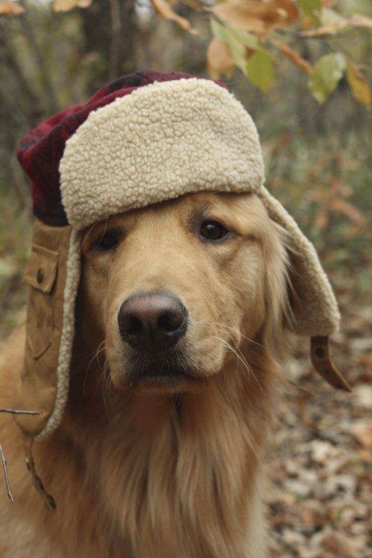 Image result for hunting dog