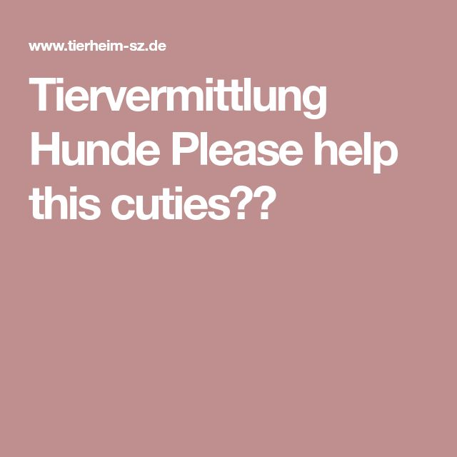 Tiervermittlung Hunde Please help this cuties😍😍