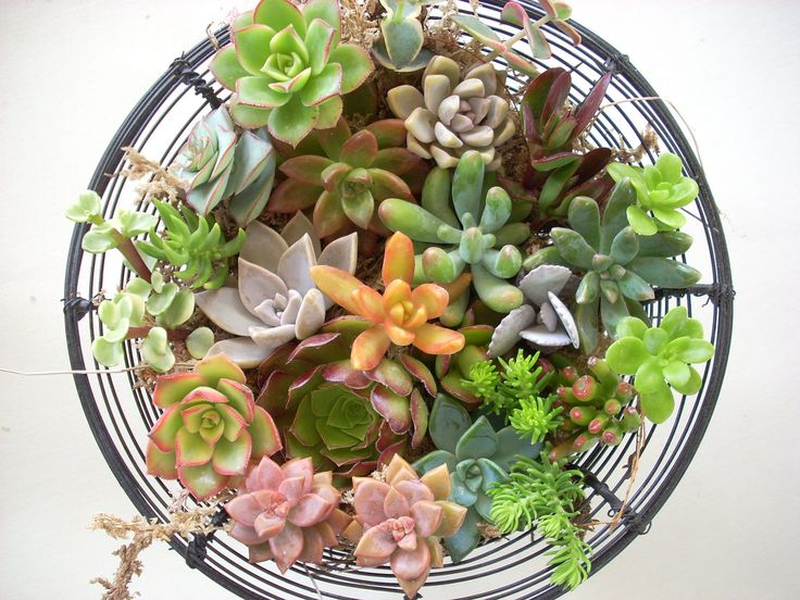 30 Live Succulent Cuttings Collection. $18.00, via Etsy.