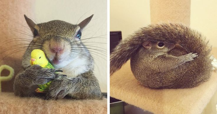 This Squirrel Was Rescued From A Hurricane. Her Adorable Antics Will Make You Smile.