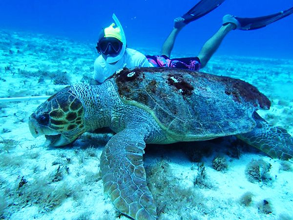 Small Group Cozumel Snorkeling Tours in Cozumel to go Snorkeling ...