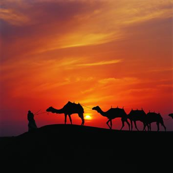 Eco-Tourism in Dubai, Experiencing the Natural Beauty of the Region   Dubai Vacation Trips