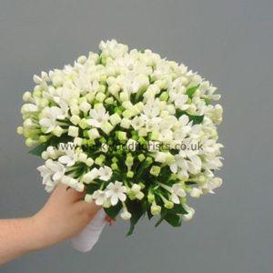 Bouvardia Bouquet