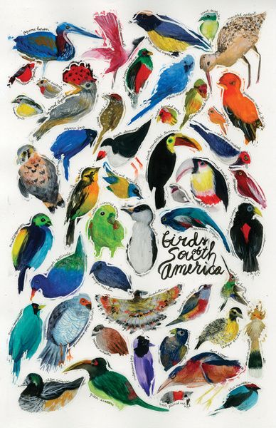 Birds of South America Art Print by Leah Zobott   #travel #color #knowmadadventures