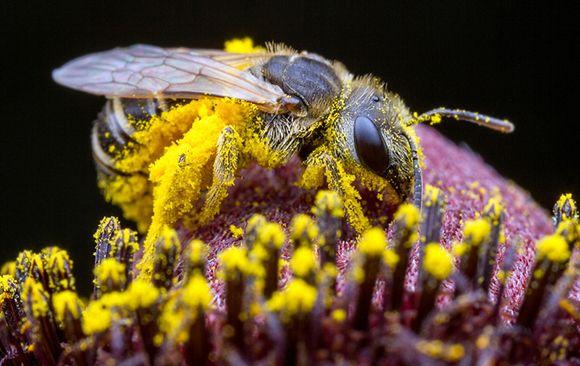 "Your Garden Can ""Bee"" Attractive to Pollinators"