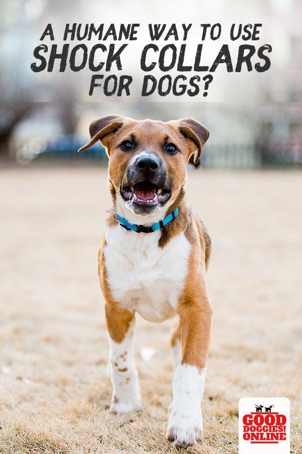 How To Use A Dog Shock Collar Dog Training Training Your Dog