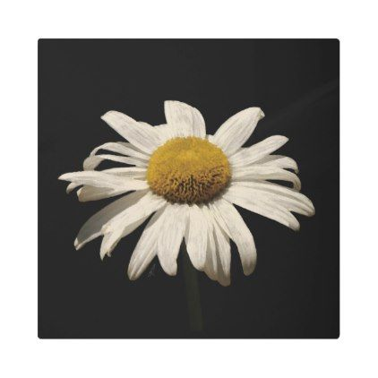 #Posters #Metal #Art - #Shades of White Daisy Metal Print