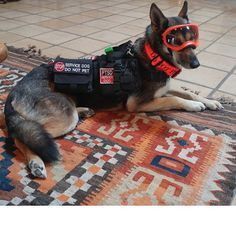 12 Struggles Of Life With A Service Dog