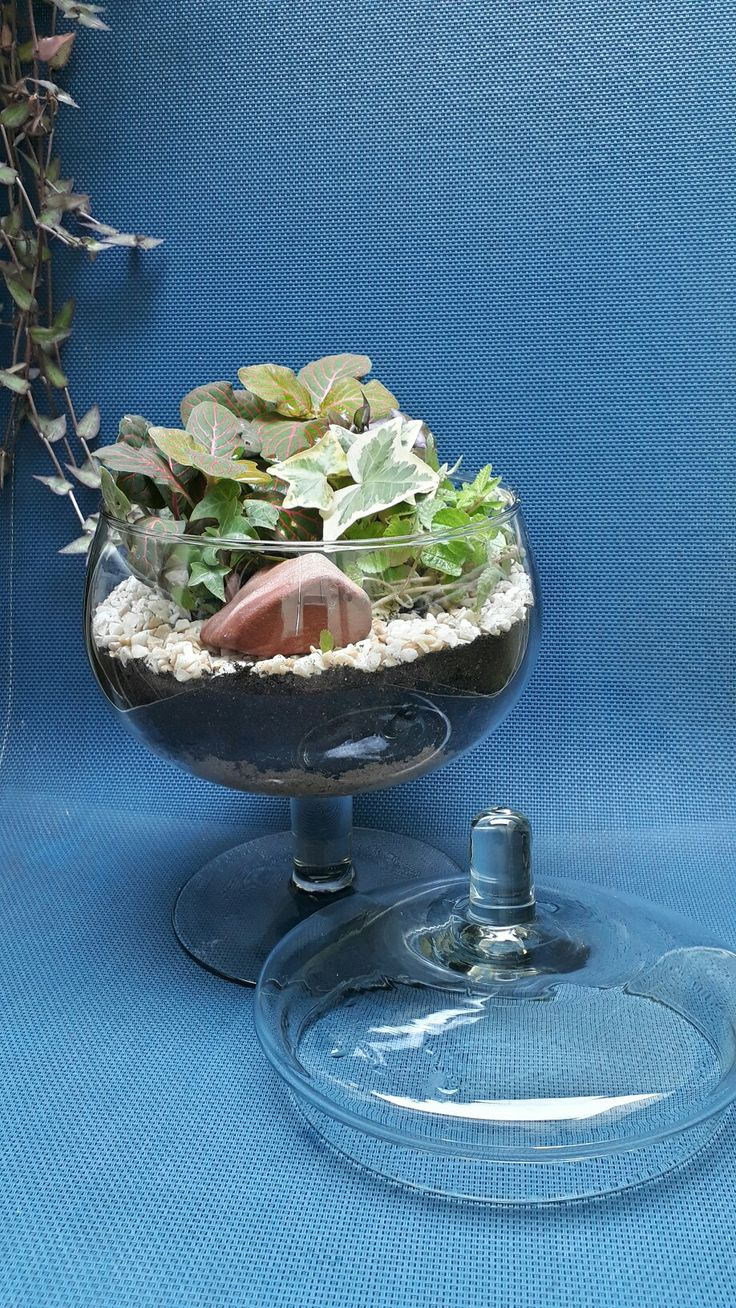 Que tal um terrário só pra você? Criação mini jardins, terrários e Kokedamas.  Se quiser comprar ou aprender a fazer, entre em contato pelo email marcia.nassrallah@gmail.com Visite também: http://studiomsdesign.com.br/jardins-em-vasos/   #terrarios #suculentas #kokedamas #terrarium #cacto #cactus #suculents
