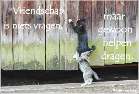 Vriendschap is niets vragen ...