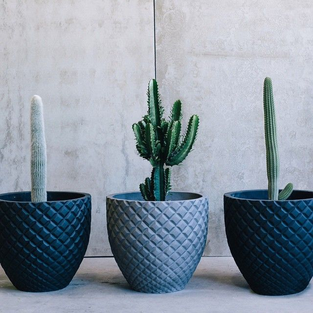 Shooting for @thebalconygarden - I love their pots!