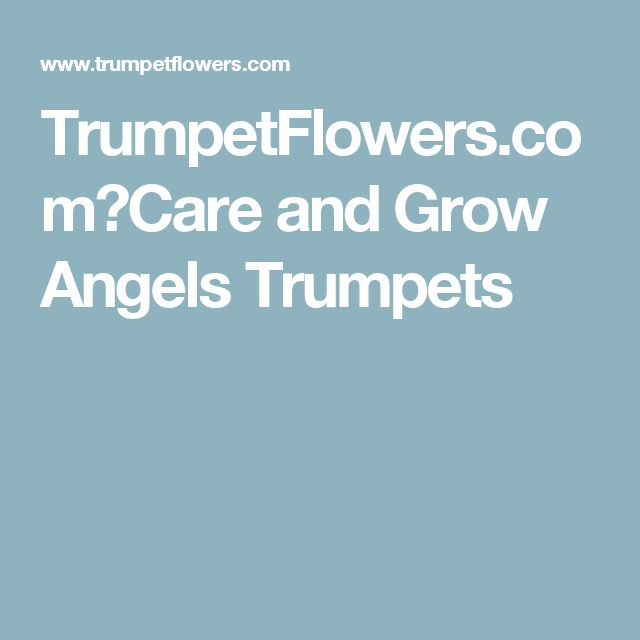 TrumpetFlowers.com∼Care and Grow Angels Trumpets
