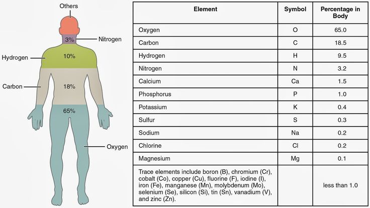 Elements in the Human Body Worksheet