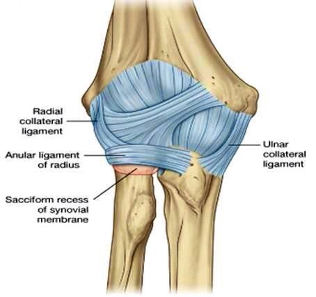 11 best mri images images on pinterest anatomy medical field and elbow joint ligaments ccuart Choice Image