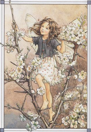 "Blackthorn Fairy. The image is from the book ""The Complete Book of the Flower Fairies"", illustrated by Cicely Mary Barker."