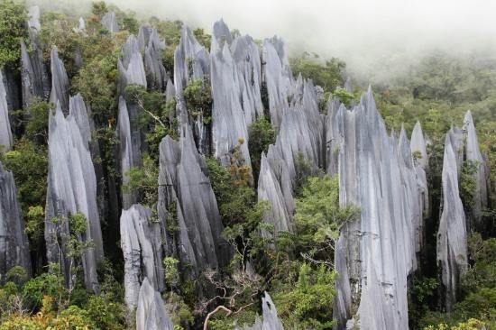 The Pinnacles Trail - Miri, Malaysia