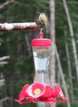 Hummingbird Food: go with a commenter's advice to clean containers with 1/2 water and 1/2 vinegar mixture instead of soap.  Also, how often to change water.