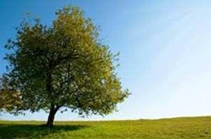 Un albero per ogni neonato. Una legge splendida che non viene applicata - http://www.ehabitat.it/2014/03/30/un-albero-per-ogni-neonato-la-retorica-normativa-rimasta-lettera-morta/